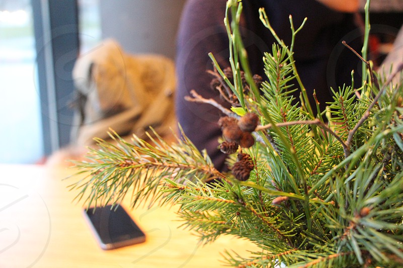 macro background table phone people blurry pine inside talking photo