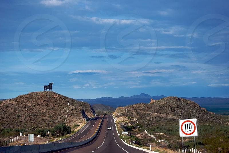 black cow on the mountain photo
