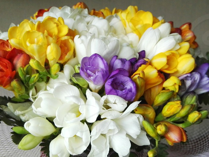 bouquet of white purple yellow and red petaled flowers photo