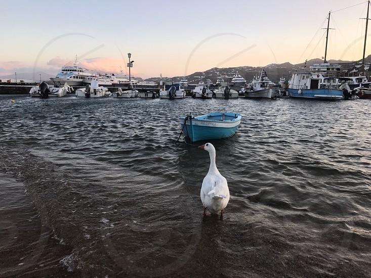 Early morning in Mykonos Greece photo