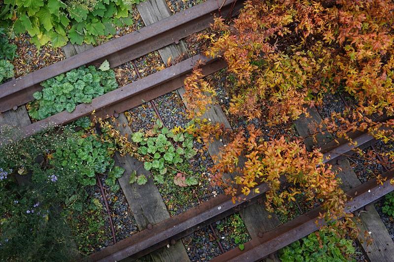 New York Highline walkway photo