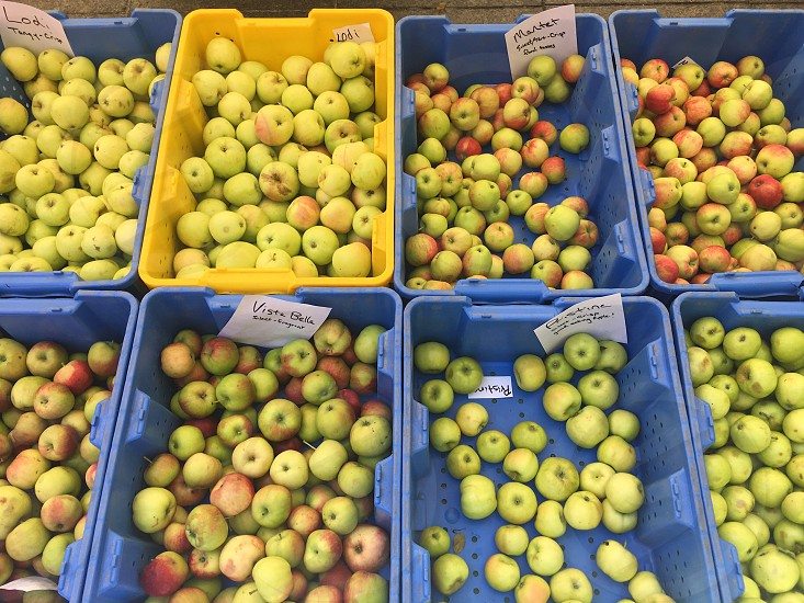 Apples farmers market eating healthy Chicago photo