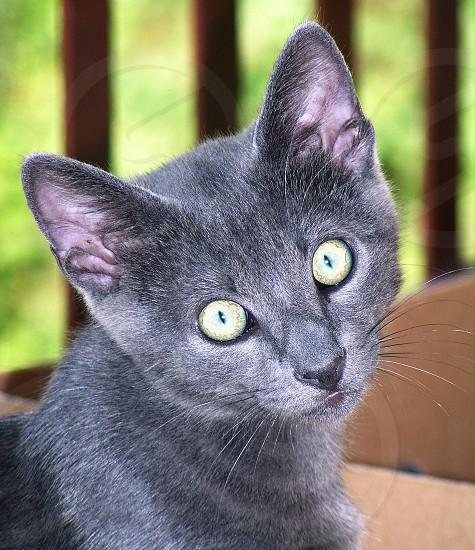 Portrait of a kitten photo