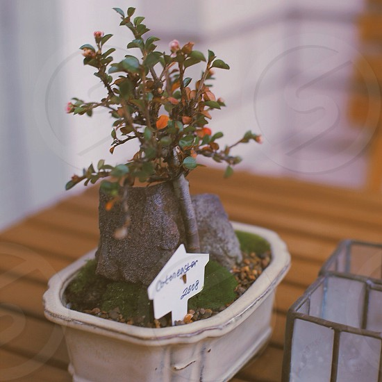 orange and green indoor potted plant photography photo