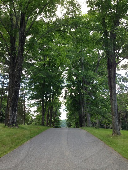 A tree lined road ascending a hill at a park in upstate New York. photo