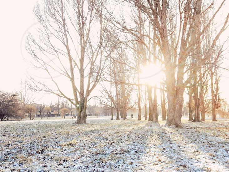 Golden morning photo