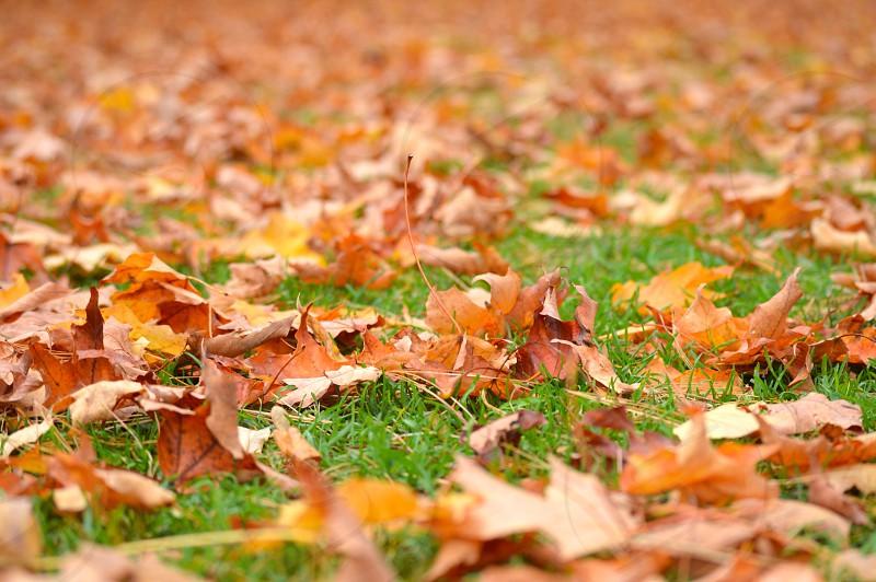 brown fall leafs photo