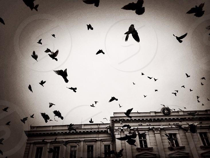Freedom... photo
