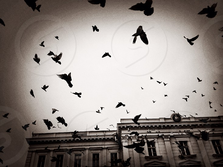 Fly away... photo