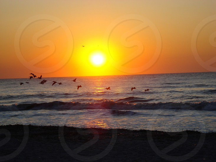 Pelicans in the sunrise. Hilton Head Island SC photo