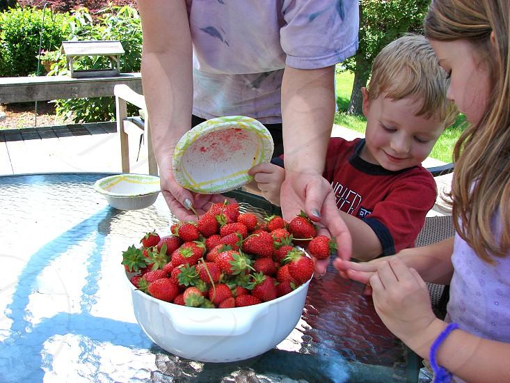 Picking Strawberries photo