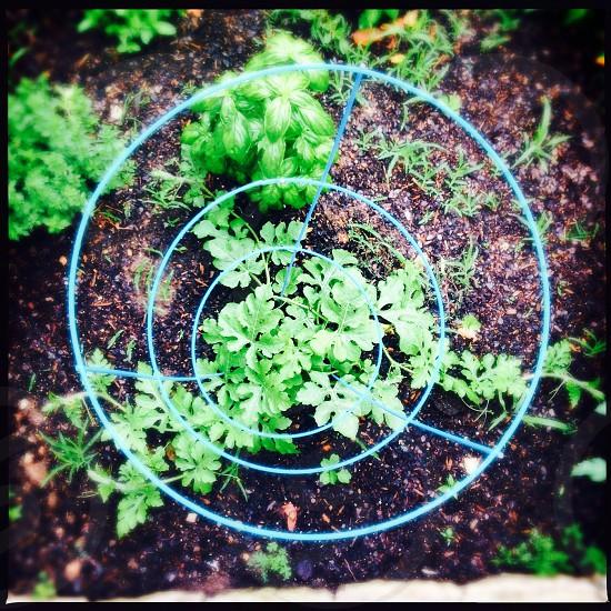 Vegetable garden circle photo