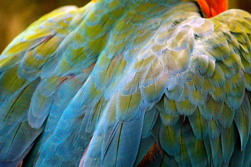 green orange blue feathered bird photo