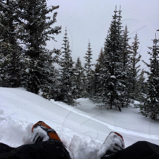 Powder day in the backcountry Colorado  photo