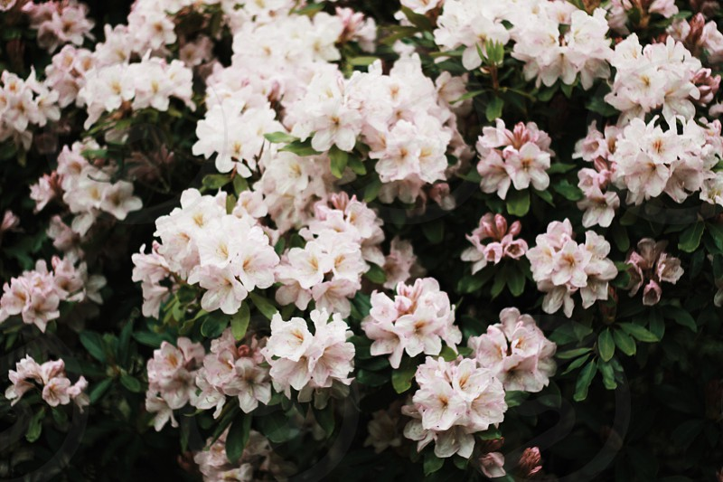 flowersspringnaturebloom photo
