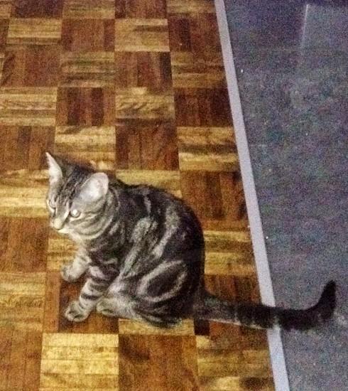 Kitty photo