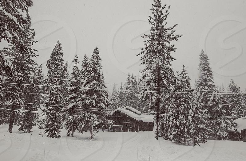 Snowy winter wonderland in Truckee CA.  photo