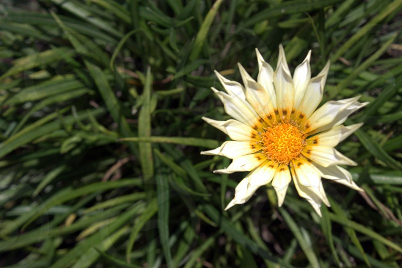 yellow and white flower photo