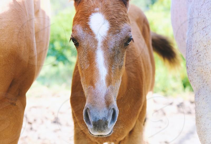 Portrait of horse foal closeup. photo