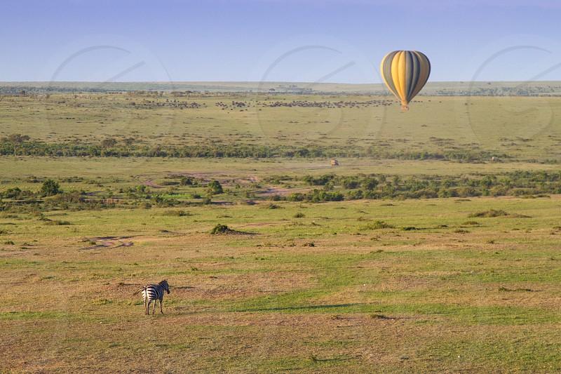 Hot Air Balloon Ride Hot Air Balloon Zebra Wildlife travel safari Africa Serengeti photo