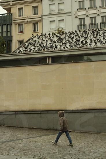 Boy under the birds photo