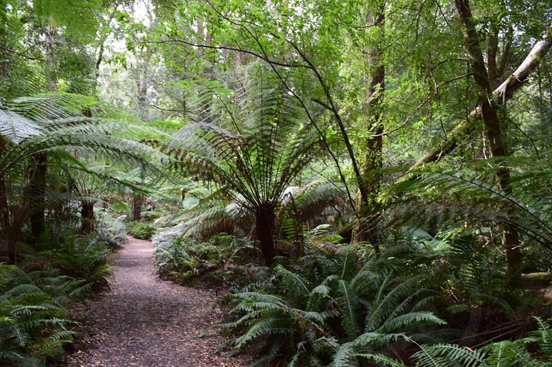 Rainforest walk photo