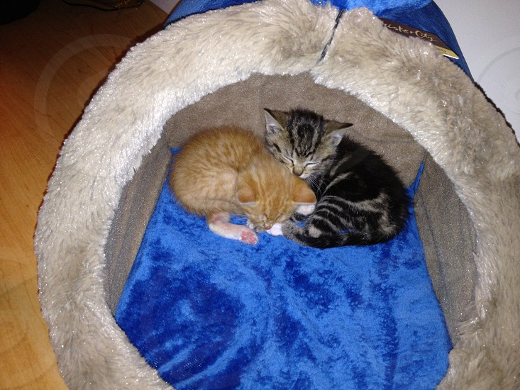 Sonny and his brother Day-Night photo