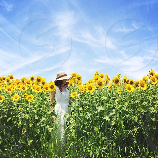 woman in white dress walking through field of sunflowers photo