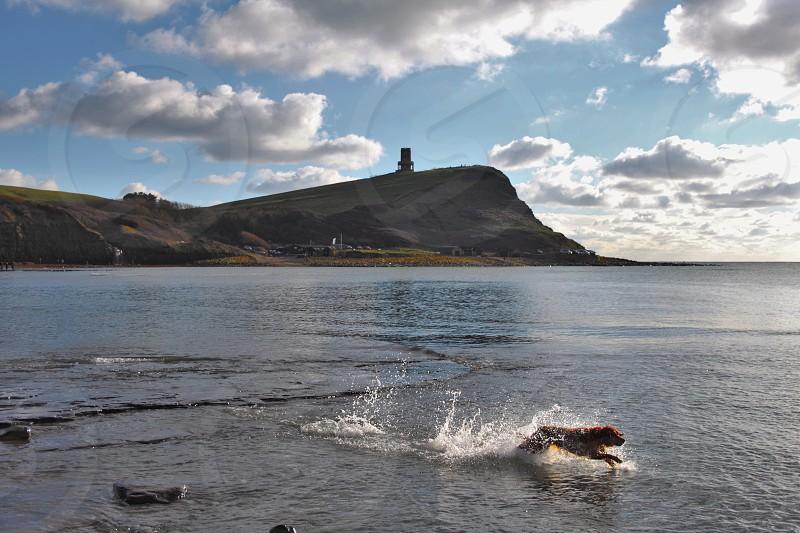 dog enjoy the sea at Kimmeridge bay Dorset England. photo