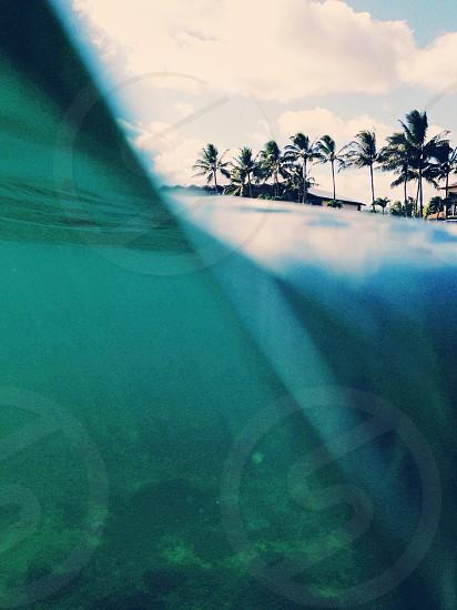 green palm tree photo