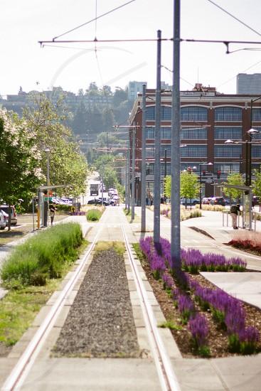 purple outdoor flowers photo