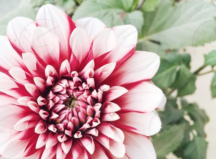 Spring blossom bloom flower punk white garden photo