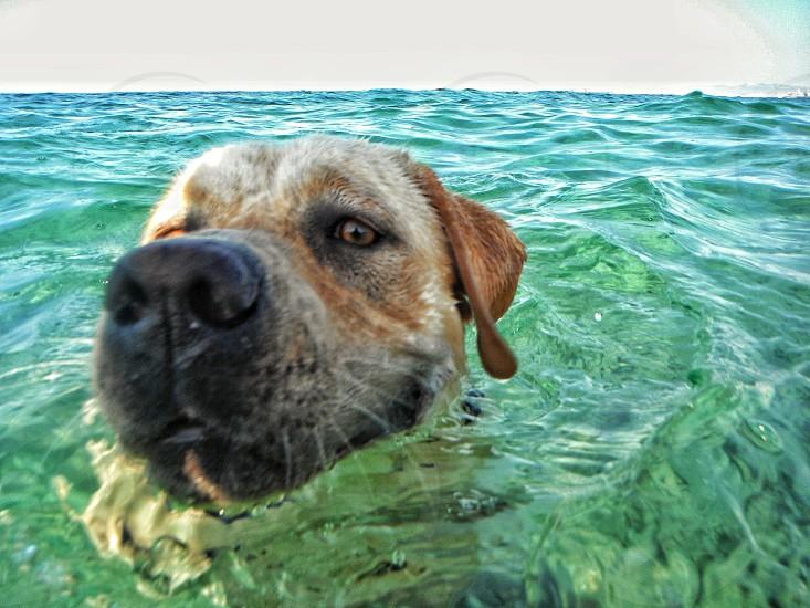 close up of swimming dog photo