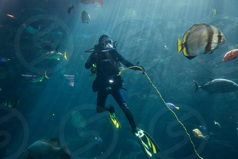 scuba diver underwater fish diving scuba scuba diving swimming adventure tropical fish photo
