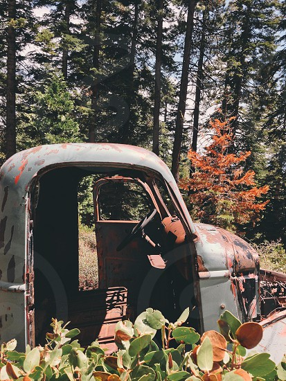 Vintage car rusting in the forest.  photo
