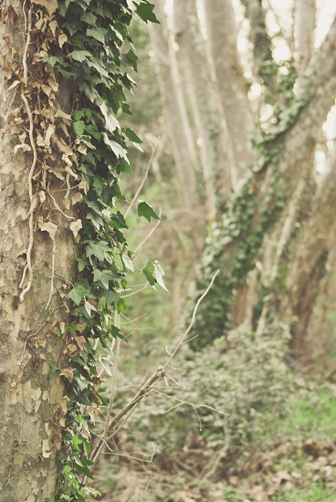 green vine clinging on rough surface photo