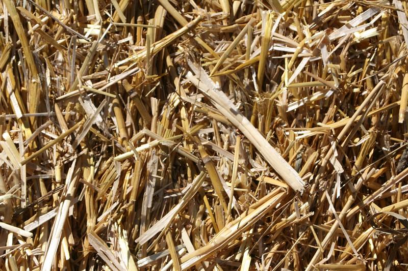 Fall Autumn Hay Straw Texture Background photo