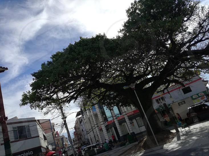 Santa Cruz Bolivia tree photo