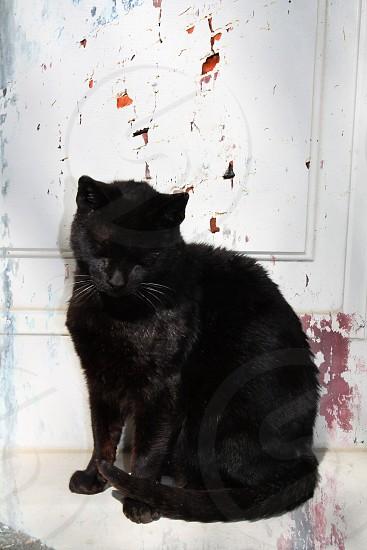 A stray cat photo