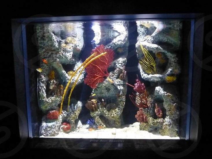 Florida Aquarium photo