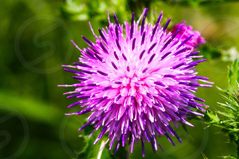 shallow focus purple flower photo