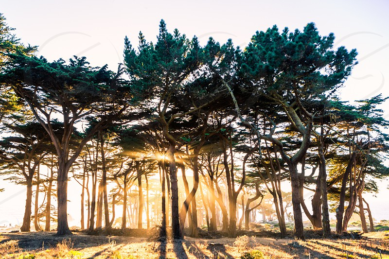 Trees Nature Light Sunset Exploration Fitness Lifestyle  California San Francisco photo