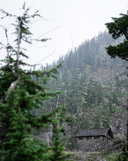 Forest Adventures in the Pacific Northwest photo