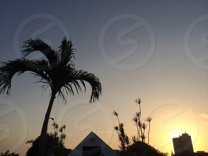 silhouette of palm tree near triangular building under sunset photo