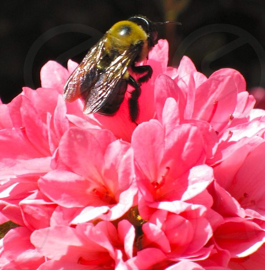 The importance of bees. photo