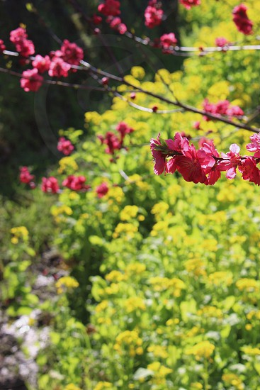 red flower near green leaved plants during day time photo