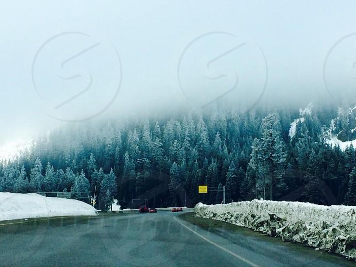 foggy sky pine trees pavement and snow photo