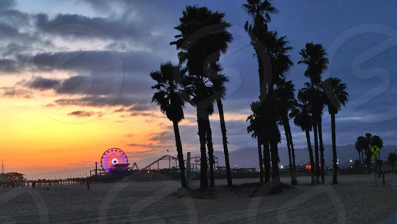 palm trees on beach with ferris wheel in background photo