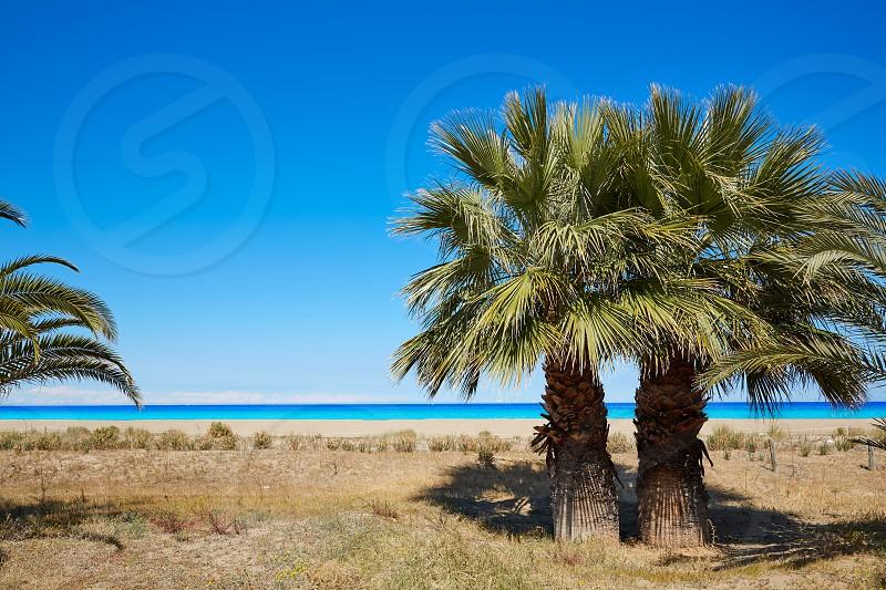 Las Marinas beach palm trees  in Denia at alicante province of spain photo