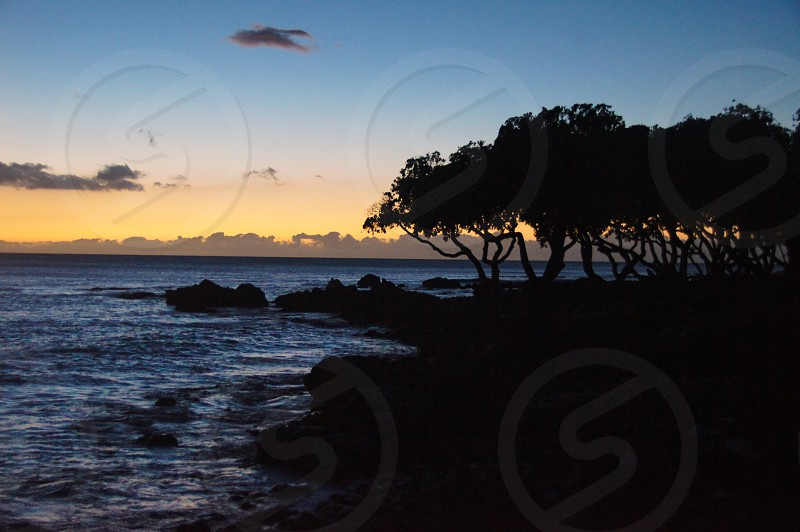 Sunset beach palm tree ocean rocks dusk colors photo